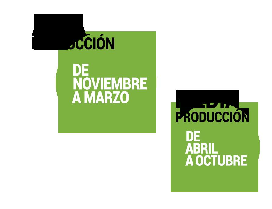 pimiento_calendario_produccion-1.png