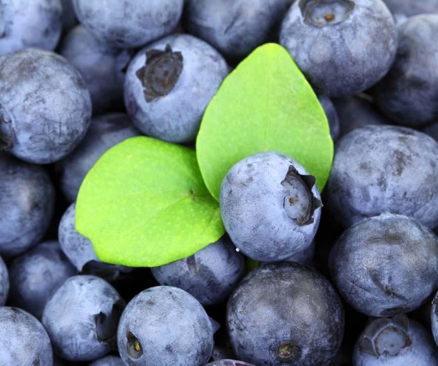 frutos rojos bosque frutas antonio