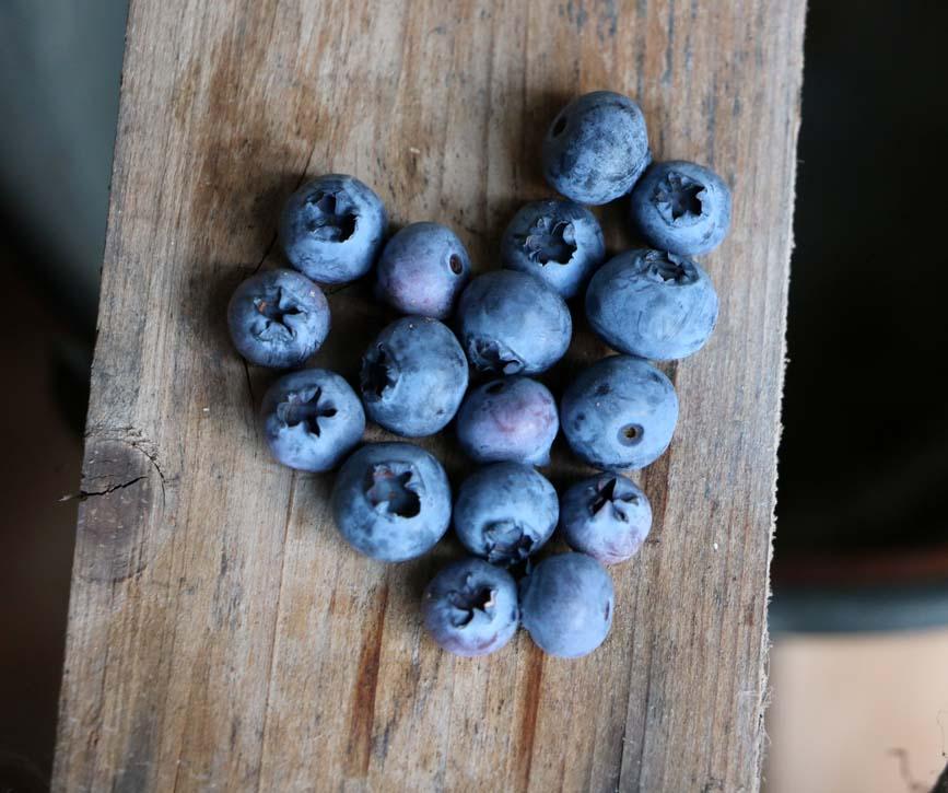 arandanos-grupo-frutas-antonio.jpg