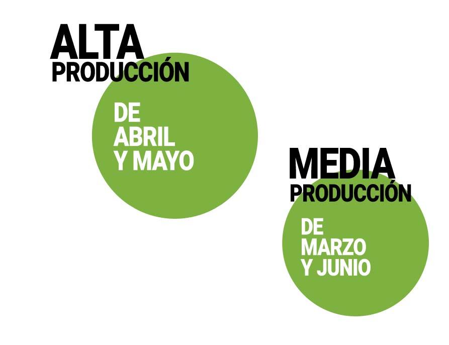 calendario-de-produccion-arandano-frutas-antonio.jpg