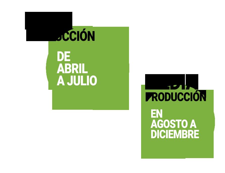 calendario-de-produccion-melones-frutas-antonio.png