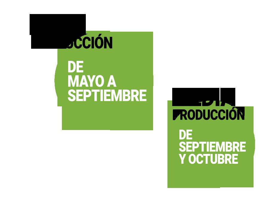 calendario-de-produccion-sandia-frutas-antonio.png