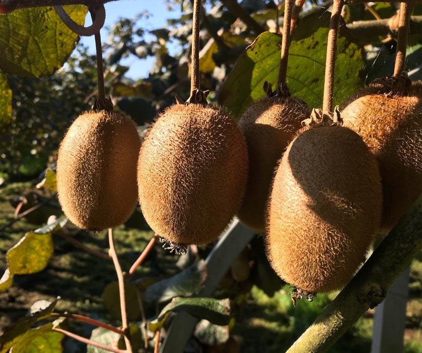 fruta ecologica sostenible biomarket mercabarna
