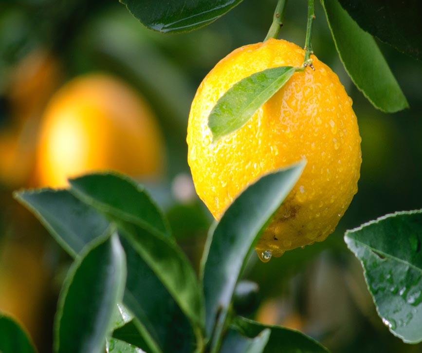 limon-frutas-y-verduras-antonio.jpg