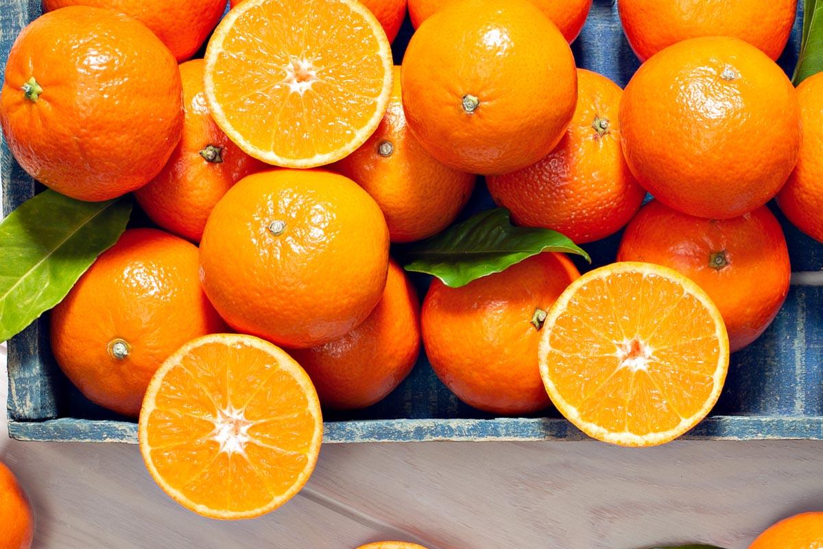 productor de mandarina en murcia