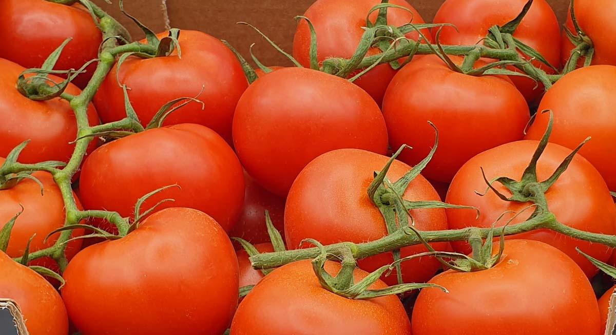 produccion de tomates de rama en almeria