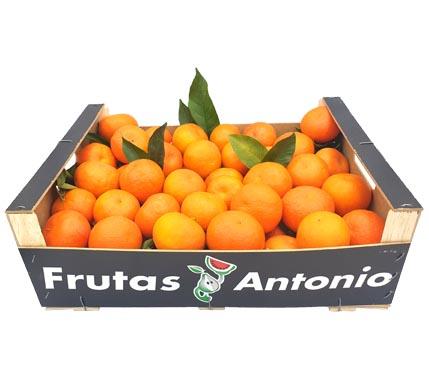 cultivos propios de naranjas en murcia