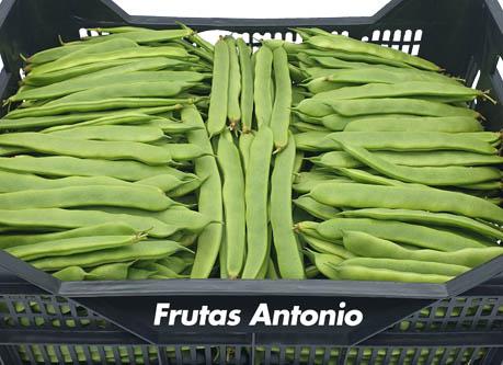 judia plana perona tierna de fruta y verduras antonio castelldedels